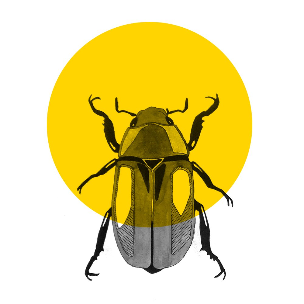About beetle graphic beetle 2